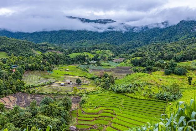 Pa bong piang-rijstterrassen in het regenseizoen, chaingmai, thailand