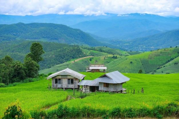 Pa pong piang rijstterrassen in het noorden van chiangmai, thailand.