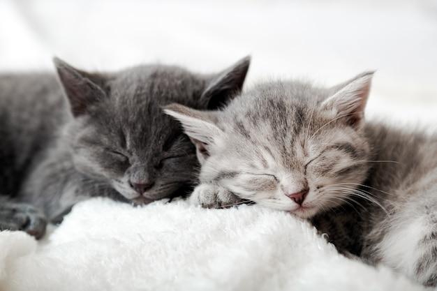 Paar gelukkige kittens slapen samen ontspannen. kitten familie verliefd. schattige kattenneuzen voor valentijnsdag. gezellig huisdier dat comfortabel slaapt.