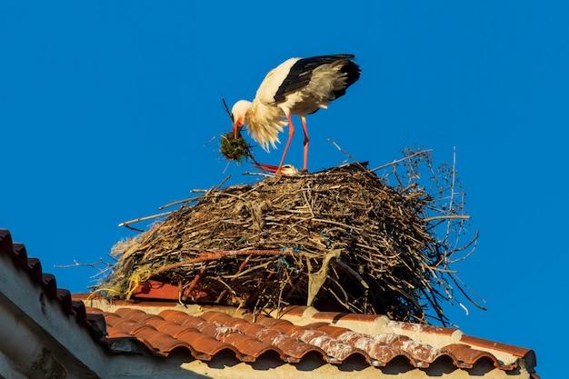 Paar ooievaars die een nest op het dak van een kerk maken. zonnige dag en blauwe hemel.