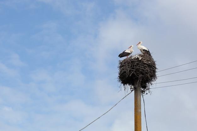Paar ooievaars in hun nest bovenop een elektriciteitspaal. twee ooievaars. elektrische post.