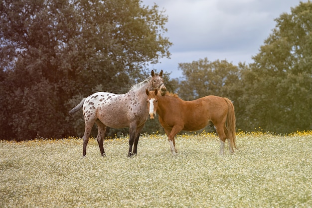 Paar paarden in een zonnige dag