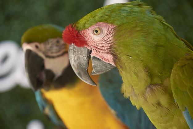 Paar papegaaien geschoten in een schaduwrijk gebied