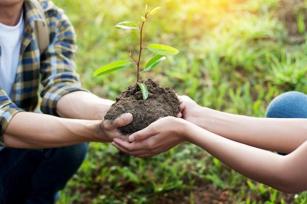 Paar planten en een boom water geven samen op een zomerse dag in het park, vrijwilligerswerk,