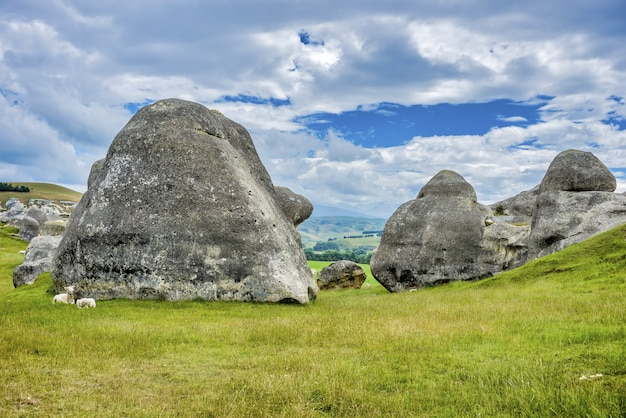 Paar schapen dichtbij rotsformaties in grasland in waitaki-bekken dichtbij oamaru in nieuw zeeland