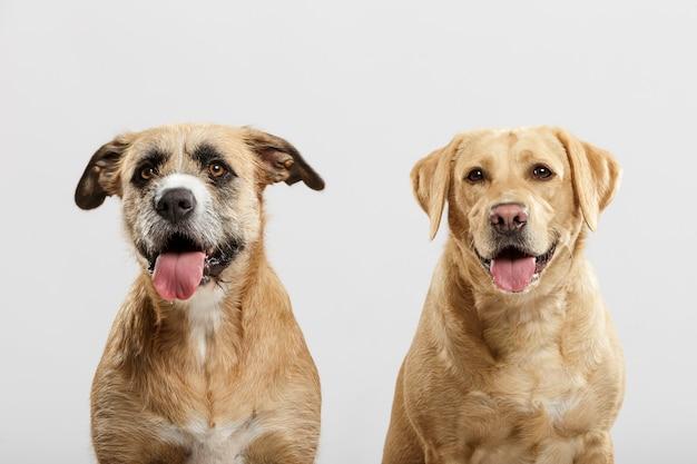 Paar twee expressieve bastaardhonden poseren in de studio tegen een witte achtergrond