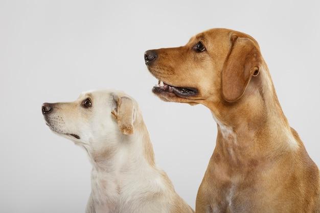 Paar twee expressieve honden poseren in de studio tegen een witte achtergrond