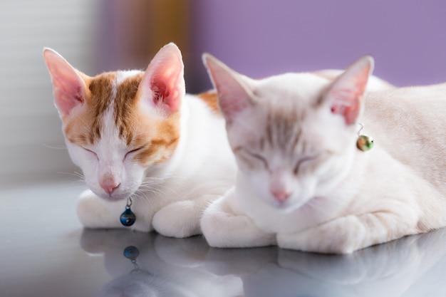 Paar van katten die op autodak slapen in een garage
