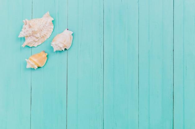 Paar witte zeeschelpen op blauw