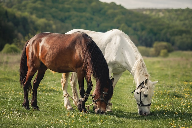 Paard alezan bruin rit manen