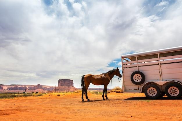 Paard bij de trailer.