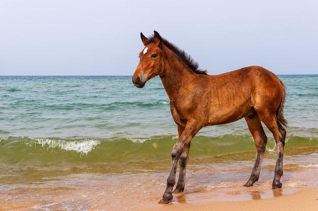 Paard bij het water