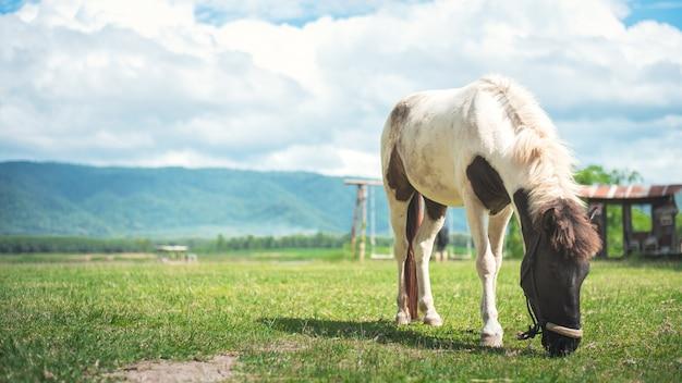 Paard dat gras op het gebied eet