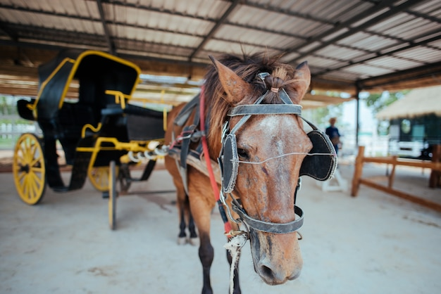 Paard en een mooi oud vervoer in de oude stad