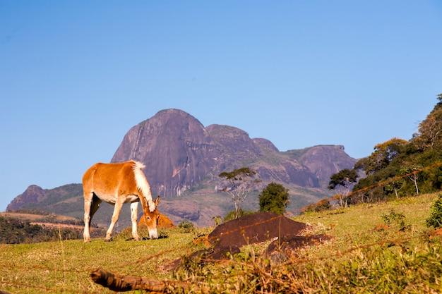 Paard en rotsachtige bergen in brazilië