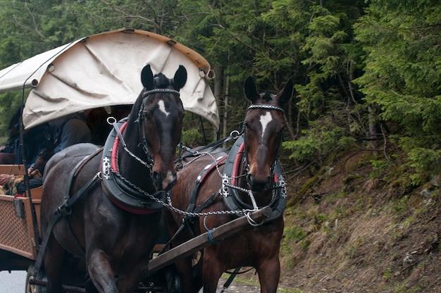 Paard en wagen passeren in de poolse tatra