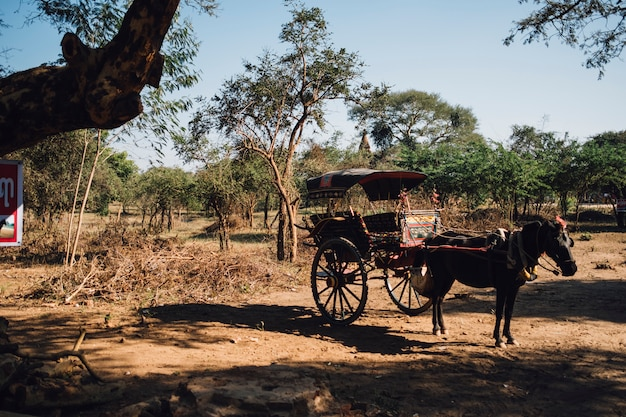 Paard en wagen voor reizen