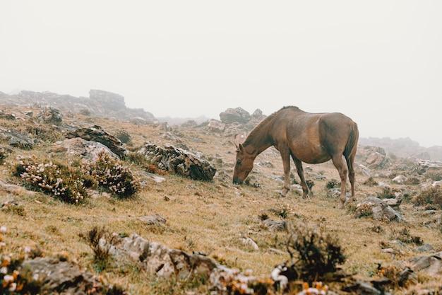 Paard gras eten bij mistig weer