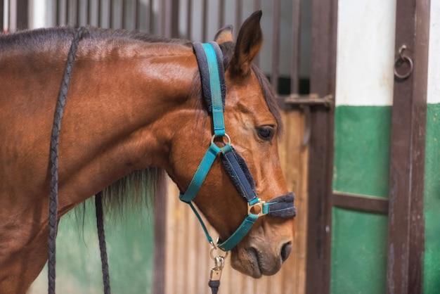 Paard in de stal