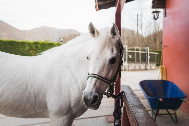 Paard in een manege