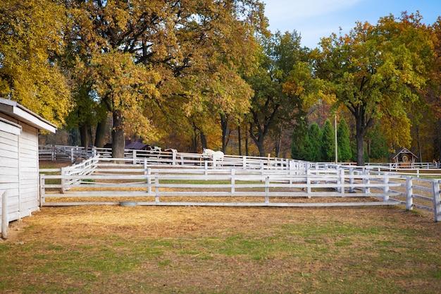 Paard in een stal in de open lucht loopt en verheugt zich bij zonsondergang.