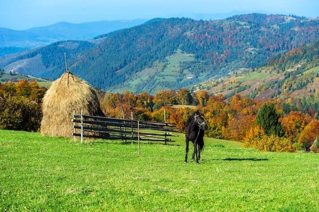 Paard in een weiland in de bergen in de herfst karpaten
