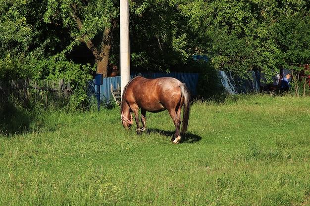 Paard in het gras