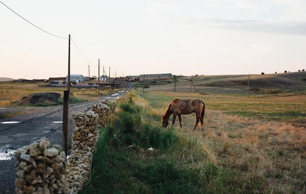 Paard in het veld grazen in de weide ochtend zoogdier