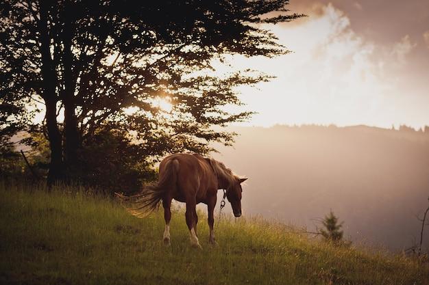 Paard in veld. op de zonsondergang.