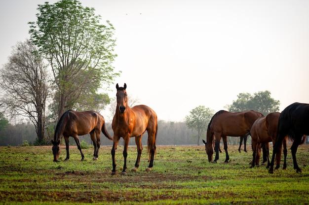 Paard kudde in veld, merrie en veulen grazen in de paardenboerderij