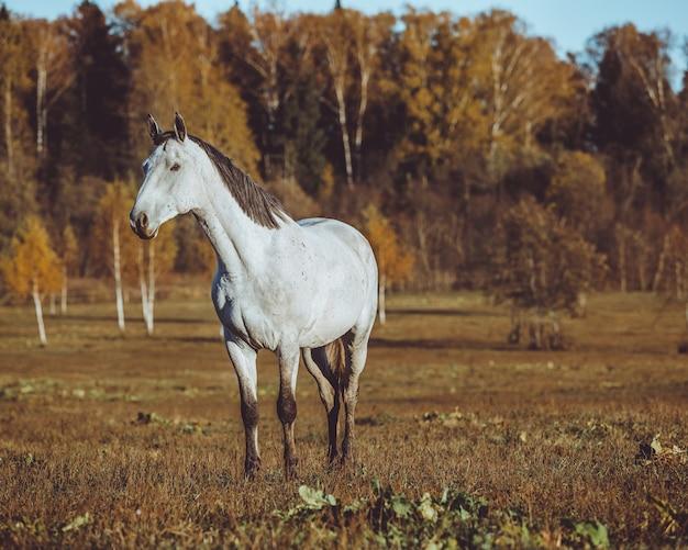Paard lopen