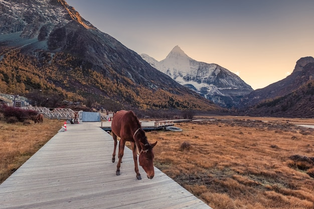 Paard op brug in weide met de heilige berg van yangmaiyong bij zonsondergang