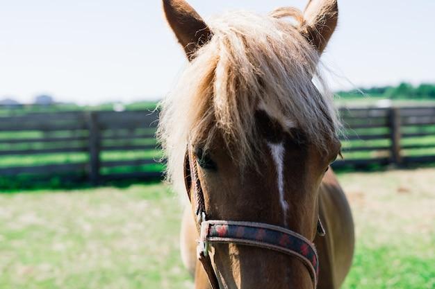 Paard op de natuur en in de boerderij. portret van een bruin paard