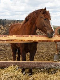 Paard op de natuur. portret van een paard, bruin paard
