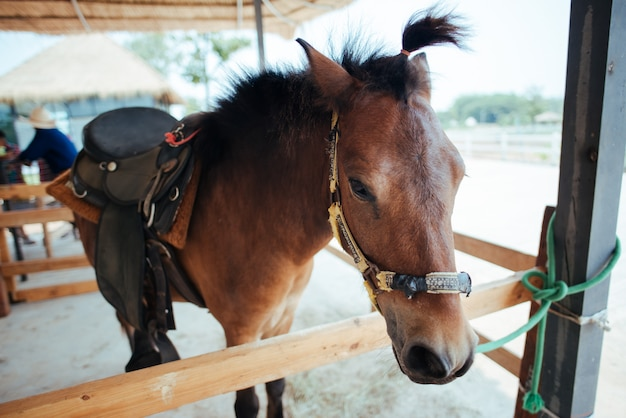 Paard op paardenboerderij
