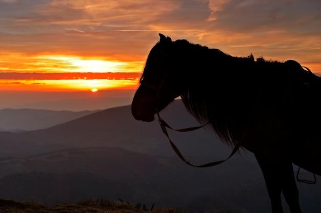 Paard silhouet op een achtergrond van avond bergen