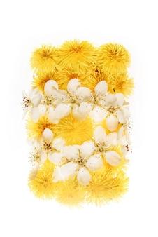 Paardebloem en kersenbloemen die op witte oppervlakte worden geïsoleerd