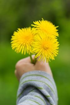 Paardebloem of stinkende gouwe groeien in een zonnige weide in het voorjaar