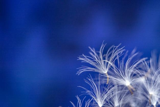 Paardebloemzaden op een abstracte blauwe achtergrond