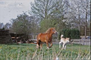 Paarden, de natuur