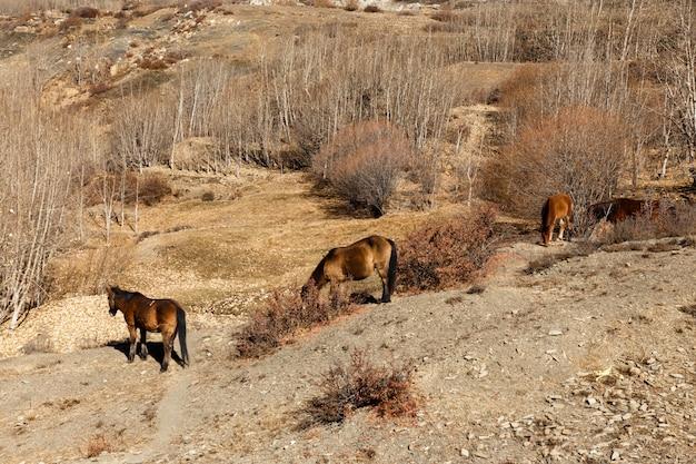Paarden die op de helling van een berg weiden