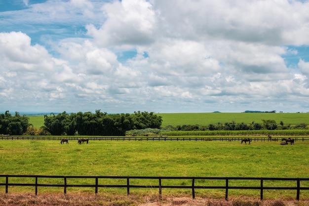 Paarden die op het landbouwbedrijfgebied weiden