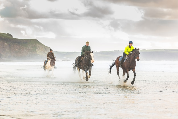 Paarden die op het strand galopperen