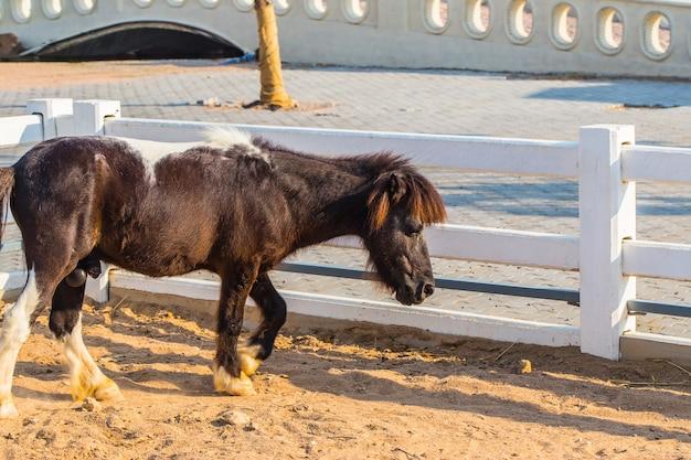 Paarden dwergen