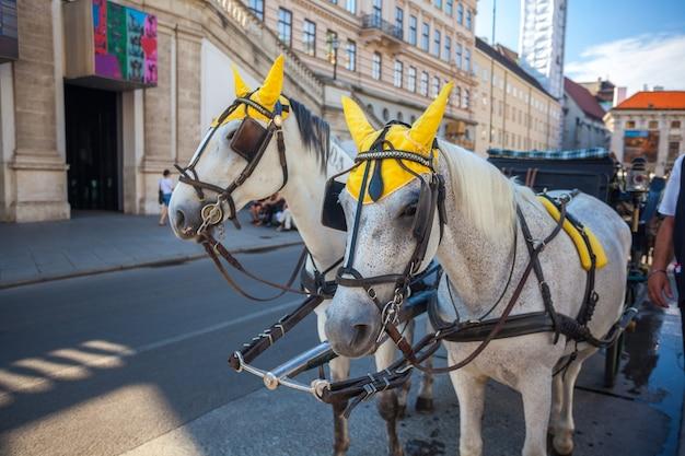 Paarden en koets traditie, wenen, oostenrijk.