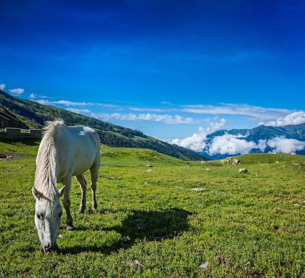 Paarden grazen in de himalaya
