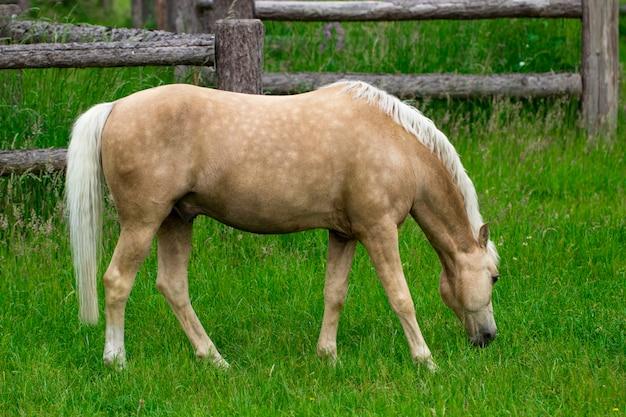 Paarden grazen in weelderige groene zomer weiland.