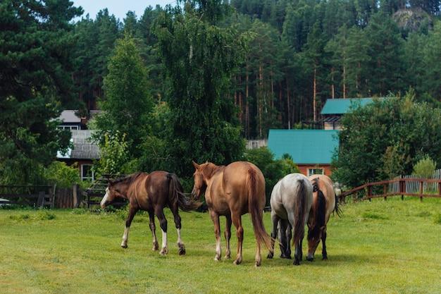 Paarden grazen op een groene weide tegen de achtergrond van een landelijk landschap