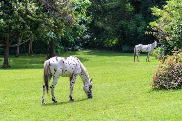Paarden grazen op groen gras in de tropische tuin