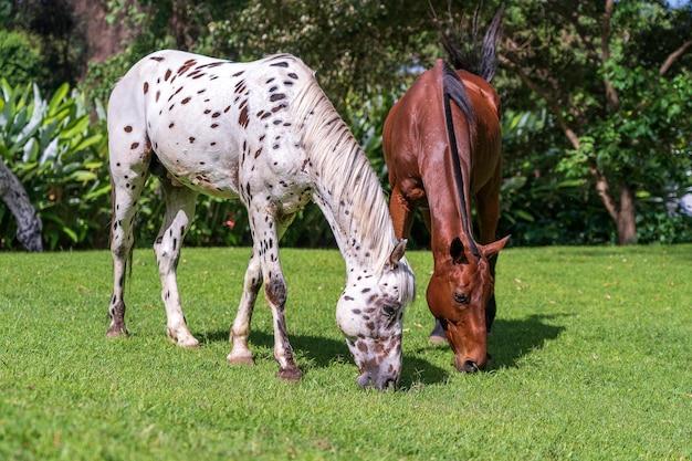 Paarden grazen op groen gras in de tuin